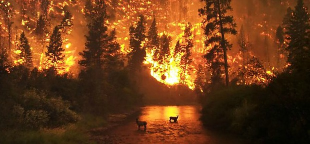Spiritual Growth: Yogananda and The Forest Fire